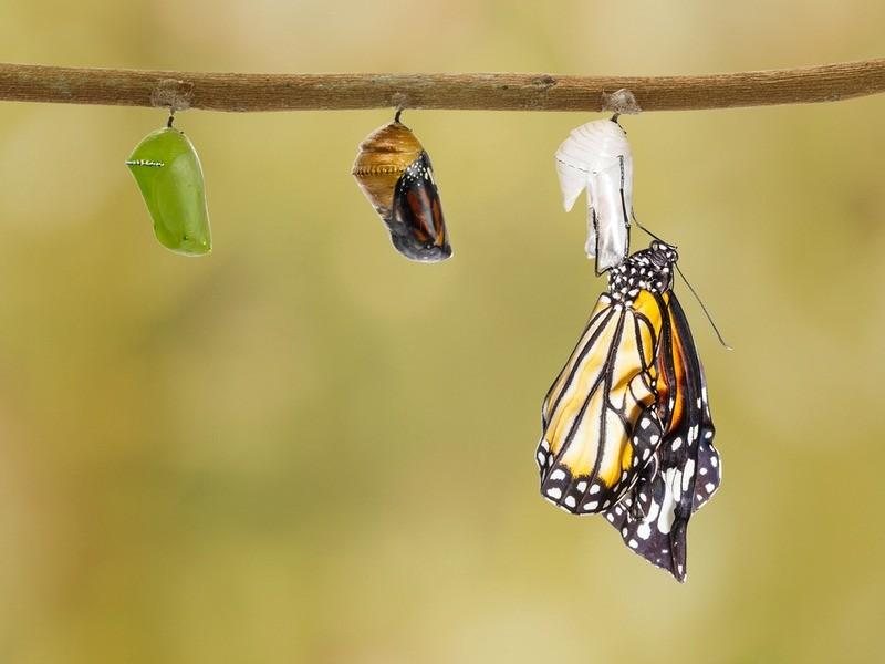 How Leaders Create an Effective Emergent Organizational Culture | Dr. Ed  Brenegar