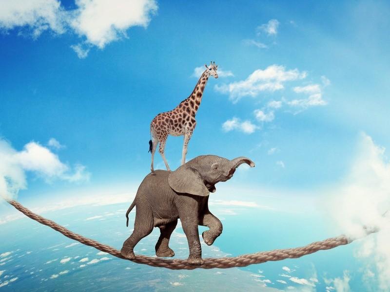 Trust elephant with giraffe walking on dangerous rope high in sky